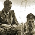 German National Identity Perhaps more than any other breed, the GSD grew out of a specific cultural movement and was fashioned to be an embodiment of the culture and values […]