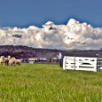 Today is the last day of the 2011 National Sheepdog Finals at the bucolic Strang Ranch in picturesque Carbondale, Colorado.  If all goes well the National Finals might return here […]