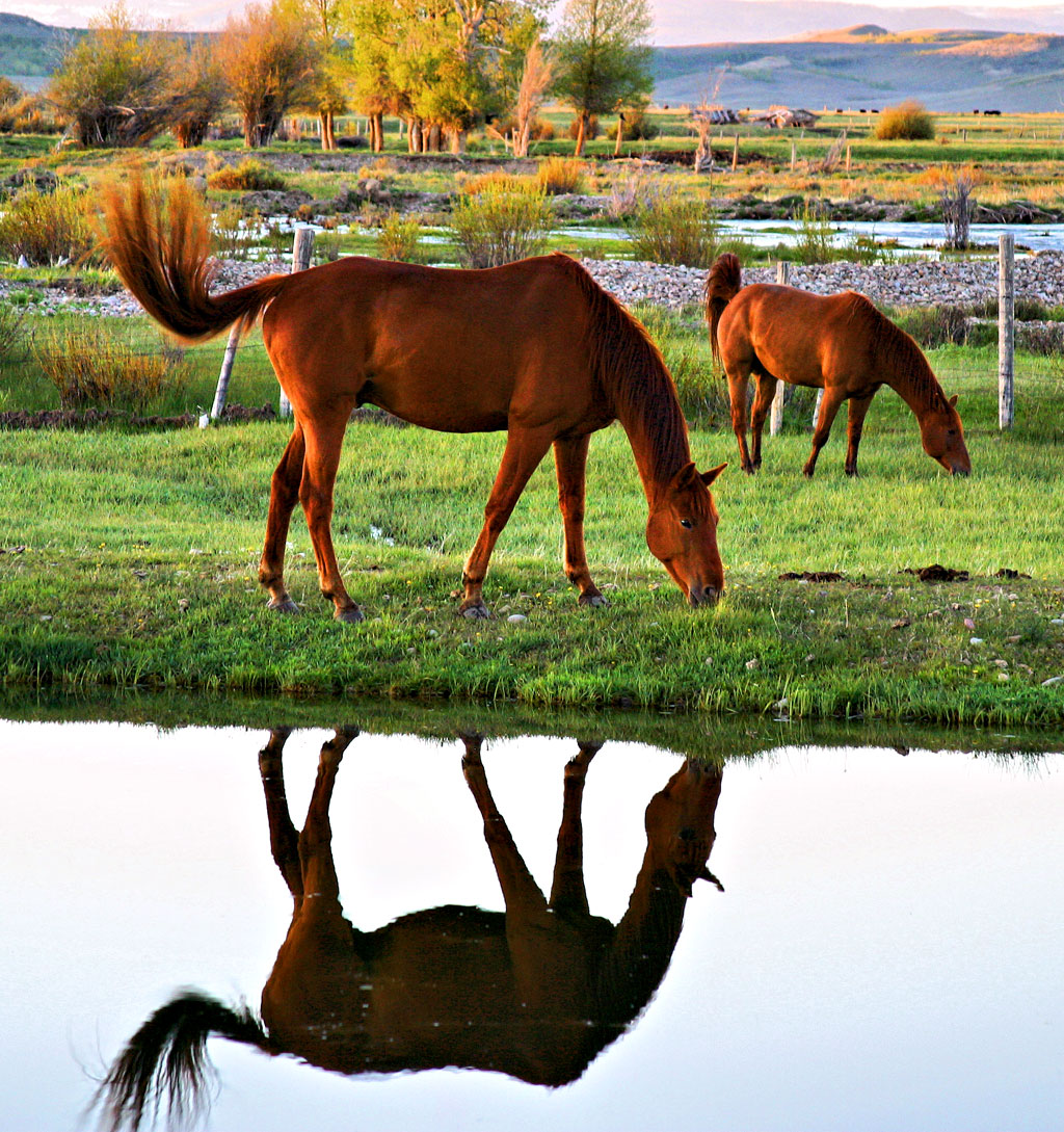 Horses don't face most of the problems in Thoroughbred breeding