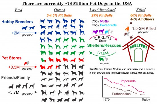 List Yearly Dog Attacks By Breed