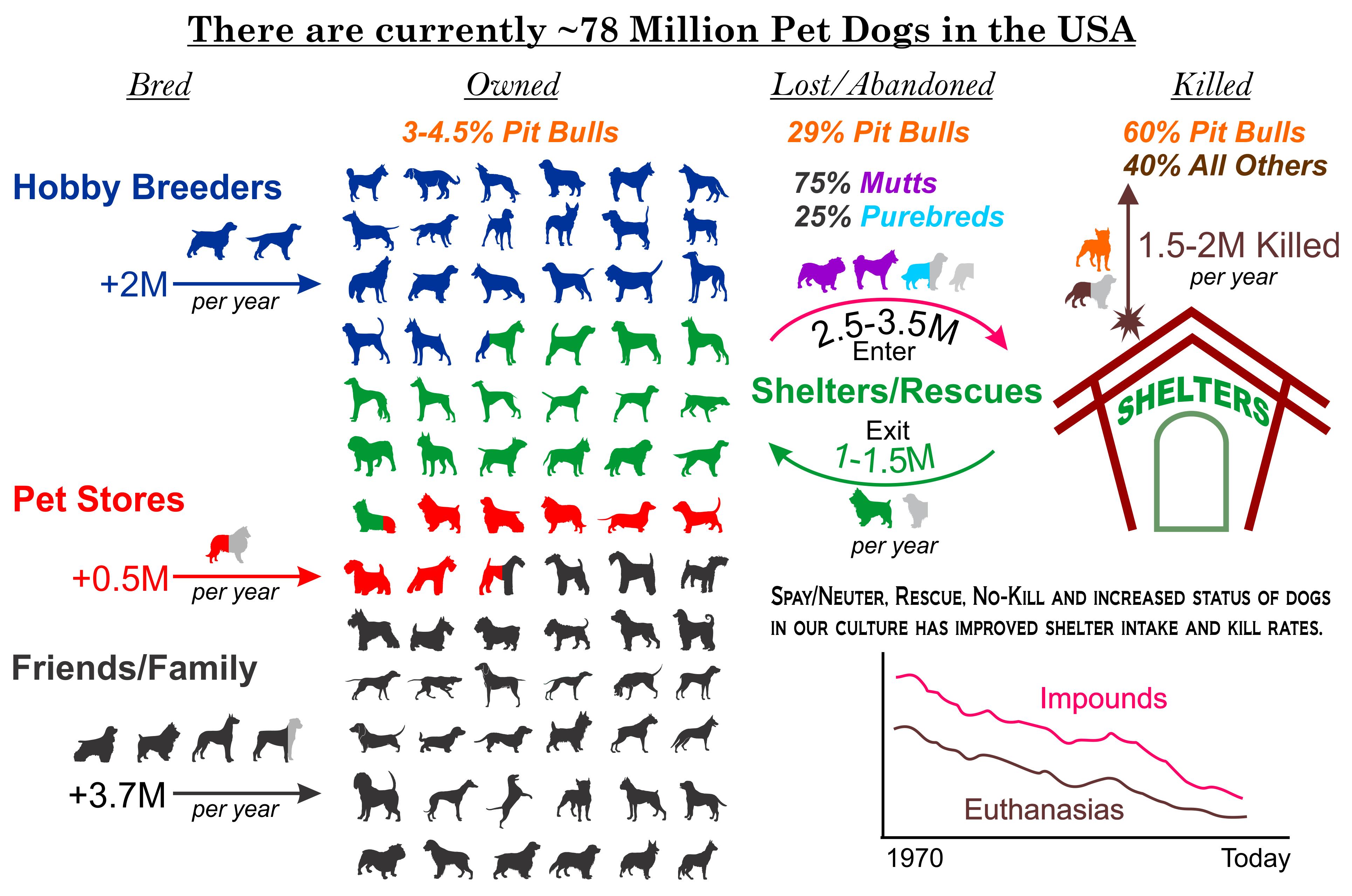 Rescue Dog Statistics Uk