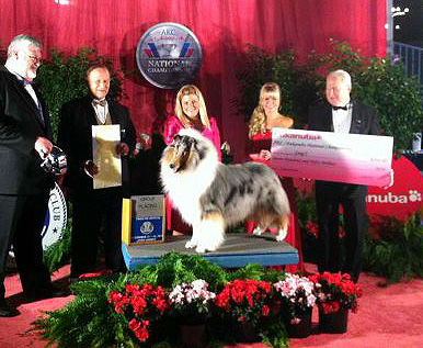 Wyndlair Cherokee Vindication winning BOB Rough Collie and Group 3rd at the 2012 Eukanuba Championship.