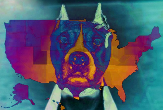 Pit Bull breeds across the USA