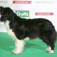 Crufts 2014 is in full swing and the breed judging for the Border Collies has chosen a Best of Breed winner, Caleykiz Rhythm In Black, a six year old bitch […]