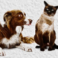 """From Anecdotes of Dogs by Edward Jesse, Esq., 1858 The Colley Or Shepherd's Dog: Hector Points the Cat """"Another peculiarity of his was, that he had a mortal antipathy to […]"""