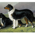 From Anecdotes of Dogs by Edward Jesse, Esq., 1858 The Colley Or Shepherd's Dog: a sheep-dog dies of starvation whilst tending his charge The following anecdote is related by Captain Brown:— A shepherd […]